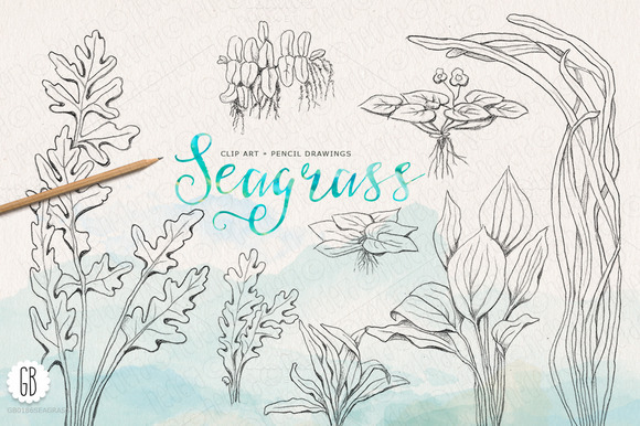 Seagrass drawing