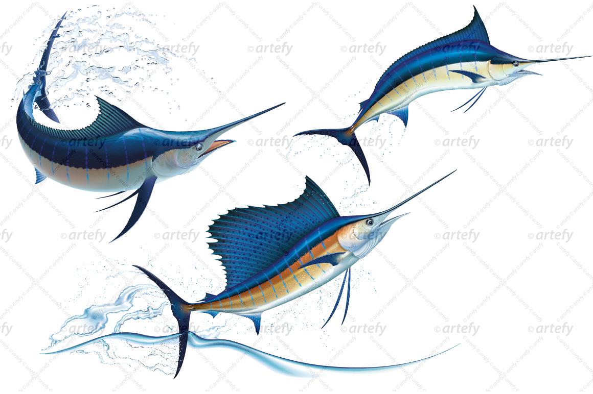 blue marlin and sailfish  3x