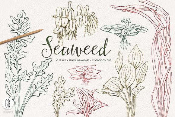 Seaweeds Hand Drawn Vintage