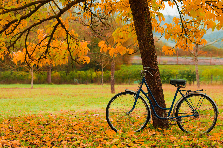 Vintage Bike Against A Tree Autumn Nature Photos On