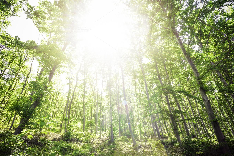 Sun Light Between The Trees Nature Photos On Creative Market