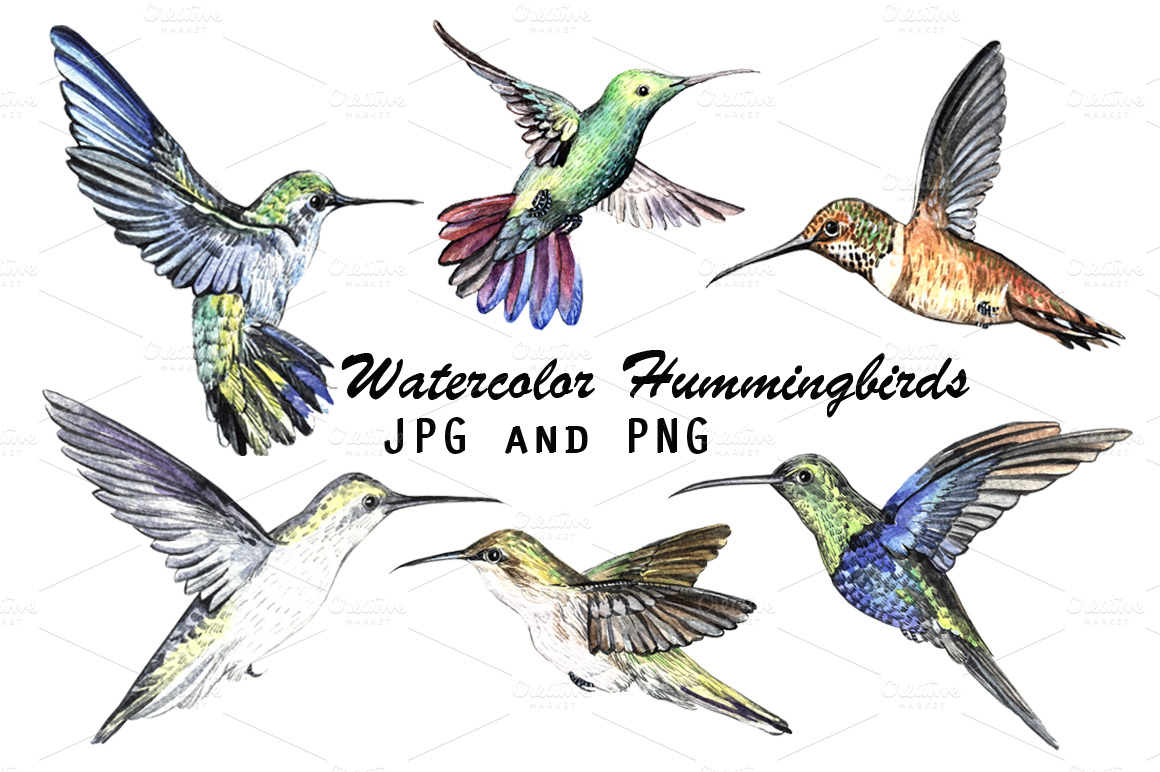 Abstract Watercolor Hummingbird Watercolor Hummingbirds