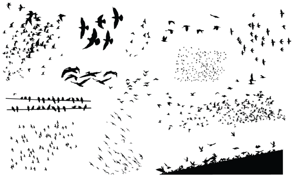 Flock of Birds Png Flock of Birds Vector Pack