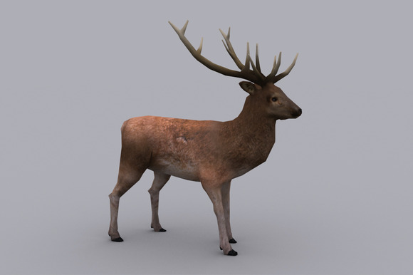 STAG fbx only