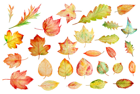 Watercolor Autumn Leaves Clipart Illustrations On