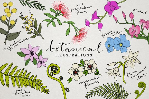 Botanical & Floral Illustration Pack ~ Illustrations on ...