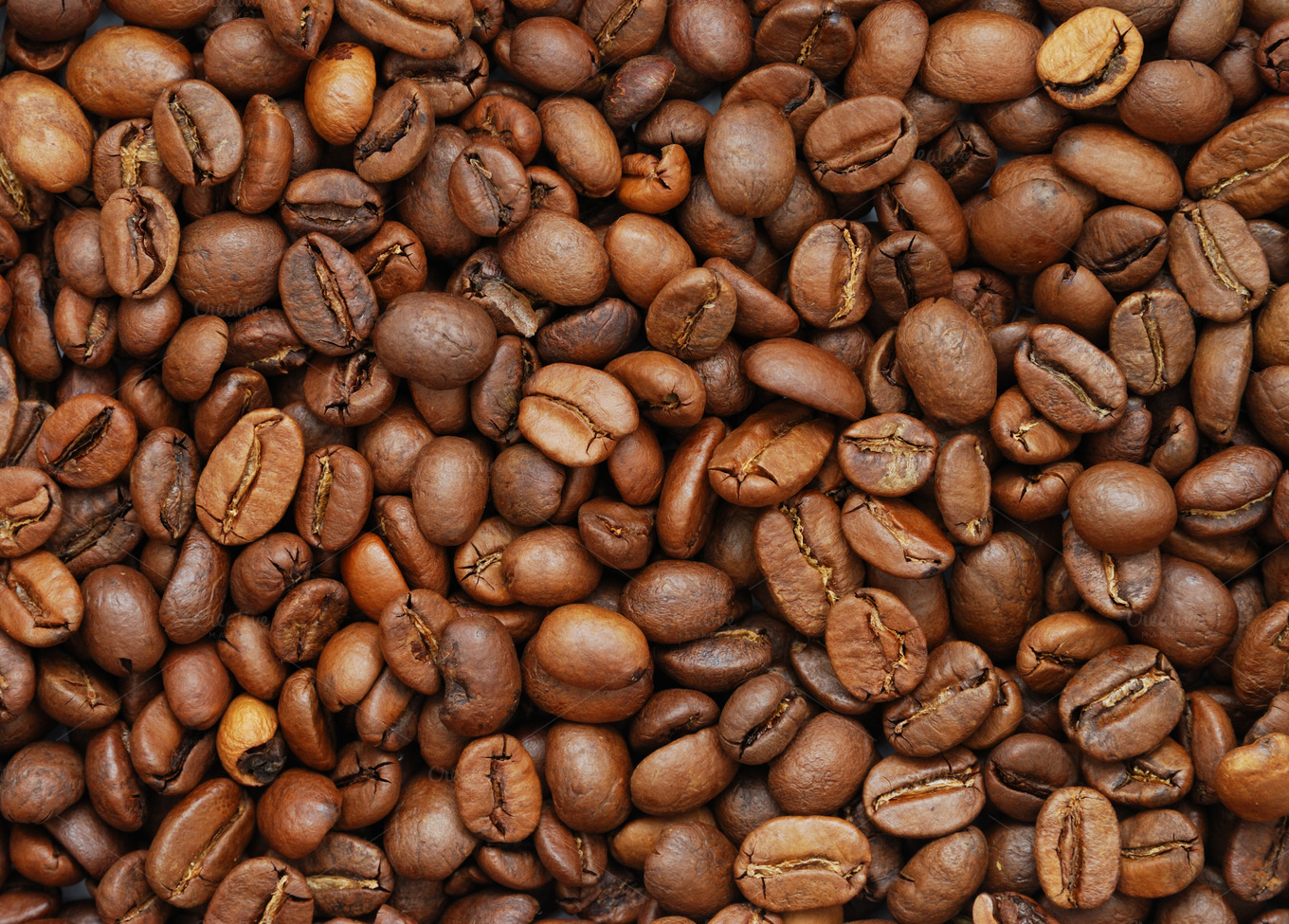 coffee beans photos on creative market