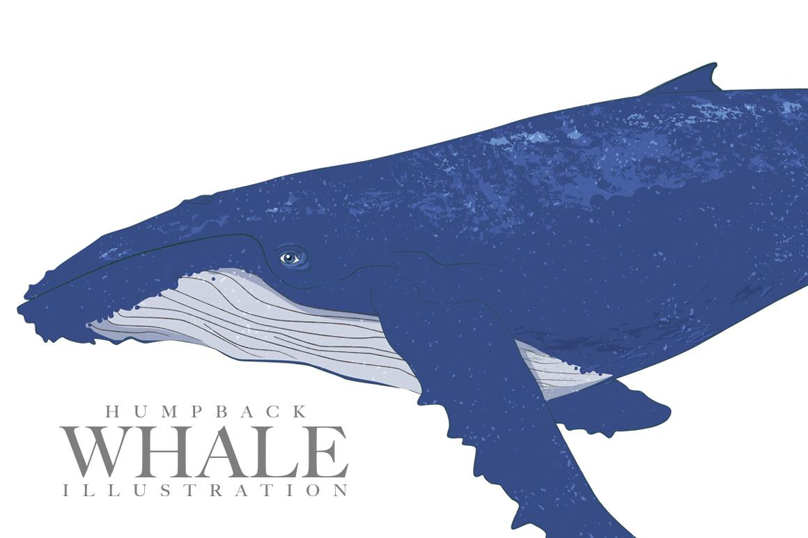 humpback whale illustration illustrations on creative market