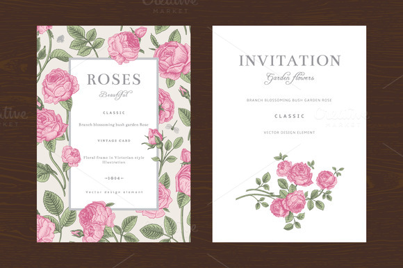 Pink Garden Roses. Vector set - Illustrations