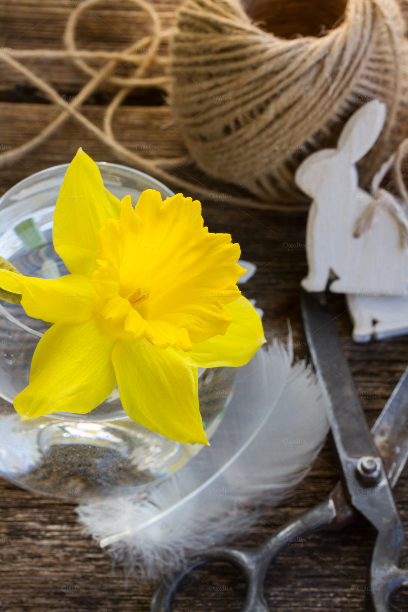 how to get daffodils to open