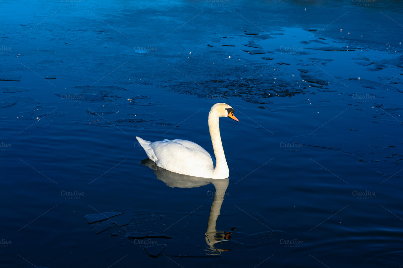white swan single guys Emma swan, also known as the  he claims every single story in his book is true and even she is in it,  they help snow white flee from the queen's knights,.