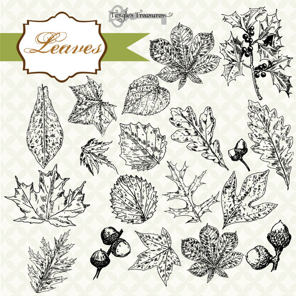 Vintage Leaves Clipart Brushes