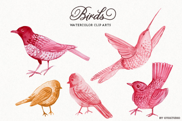 Watercolor Bird Flying Watercolor Bird Illustrations