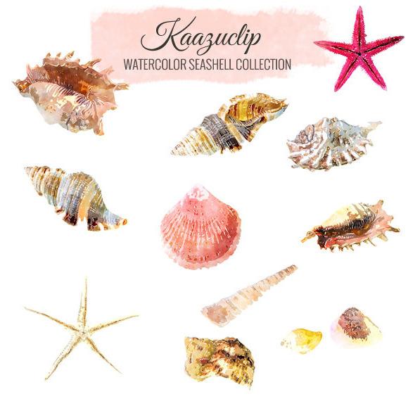 Watercolor Seashell Set