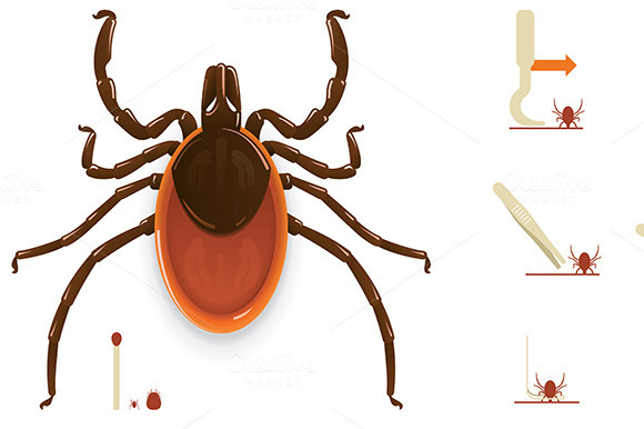 Tick Removal Infographic Elements