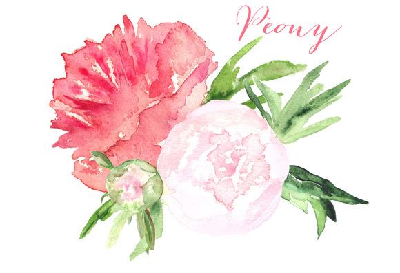 Пионы цветы пнг 2