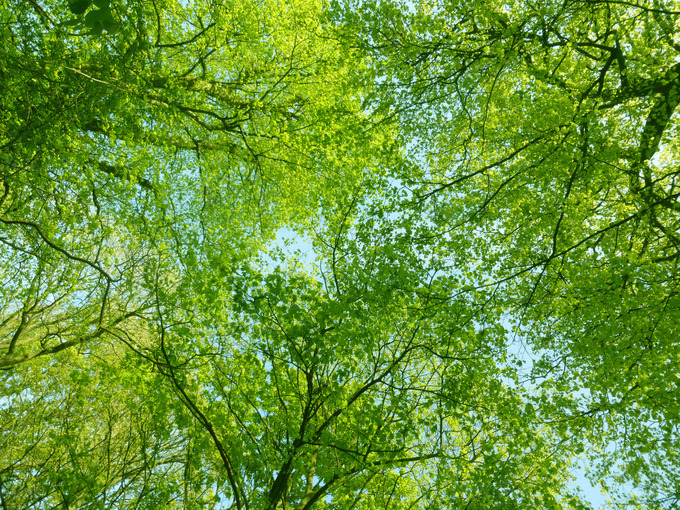 nature spring green tree - photo #12
