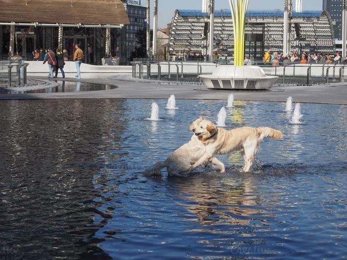 Dog Bathing In Fountain Animal Photos On Creative Market