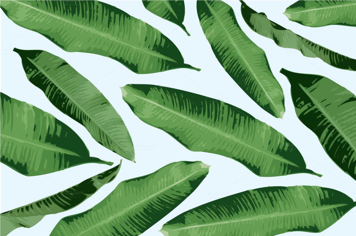 banana leaves vector ~ Illustrations on Creative Market