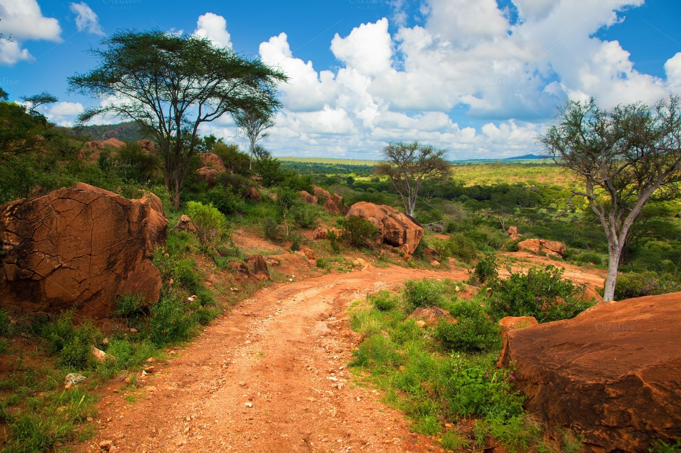 Savanna landscape in Africa ~ Nature Photos on Creative Market