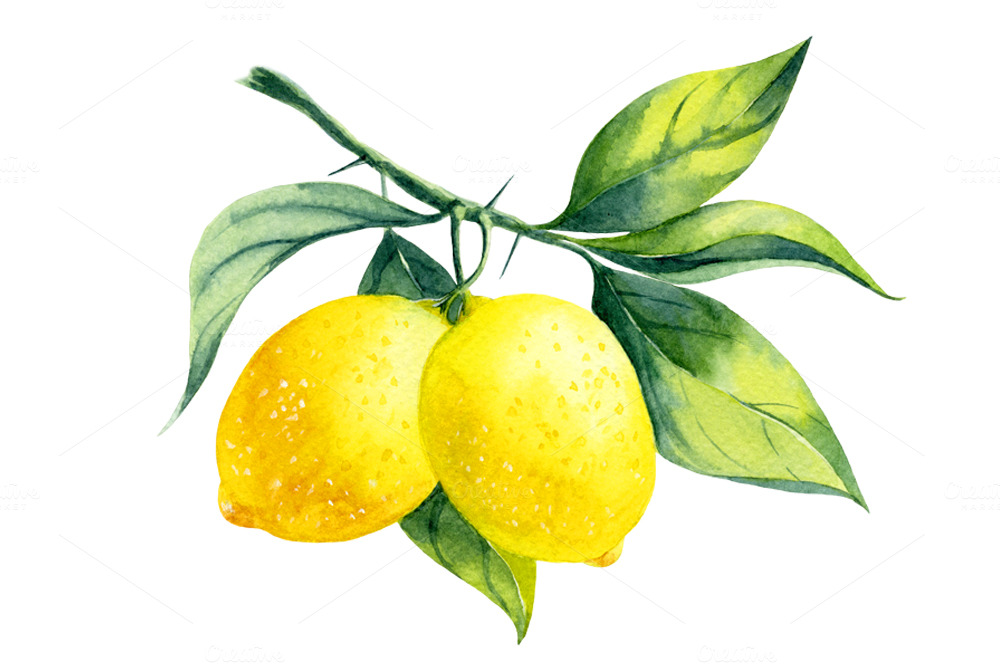 261029 Watercolor Lemon Branch on cup of juice clip art
