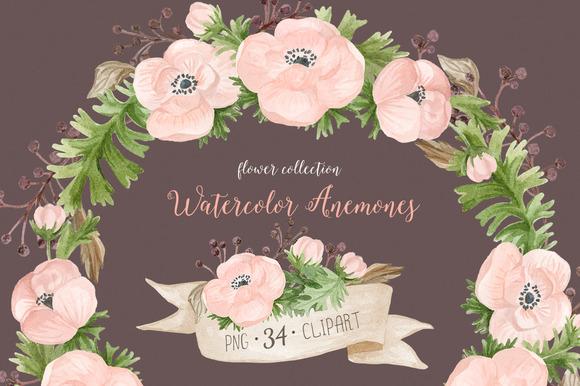 Watercolor anemones. Floral set 2 - Illustrations