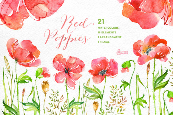 Red Poppies. Floral collection - Illustrations
