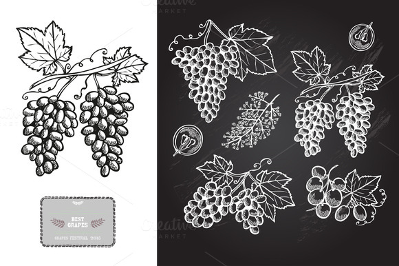 Hand Drawn Grapes