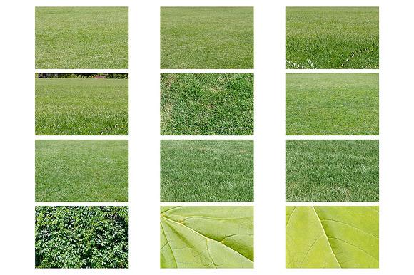 Fresh Green Grass Textures
