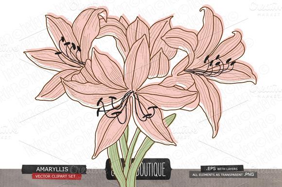 Amaryllis Flower Vector Clip Art