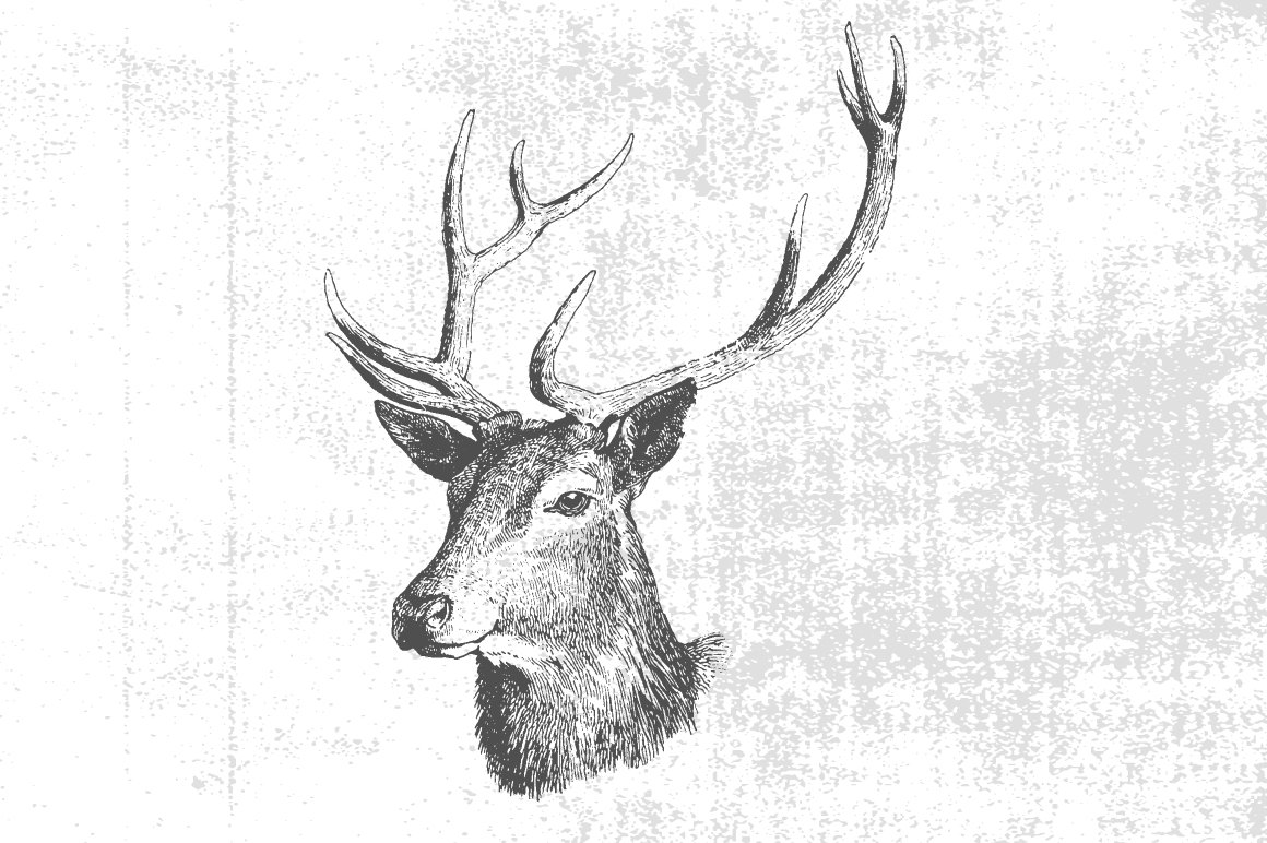 Vintage deer illustration