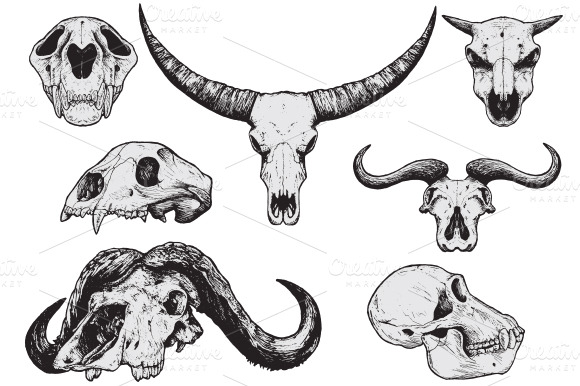 Animal Skulls Hand Drawn Illustrations On Creative Market