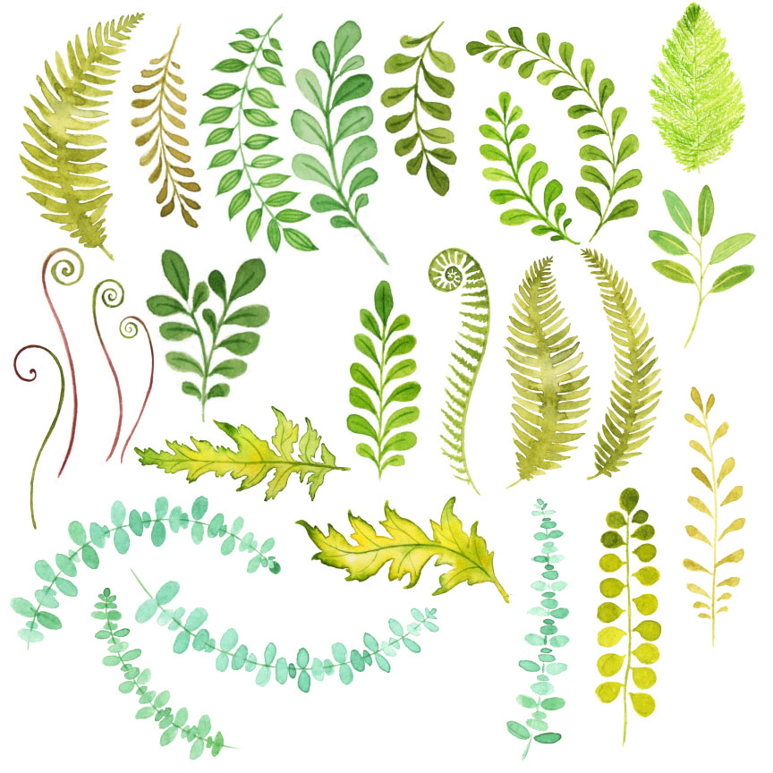 Watercolor foliage illustrations on creative market for Watercolor greenery