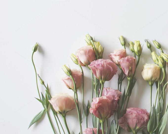 Minimalist Pink Flowers Nature Photos On Creative Market