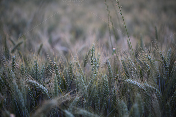 Summer Fields Soft Background