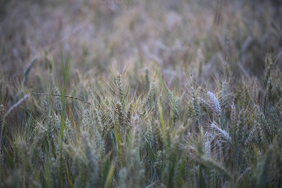 Summer Fields Background