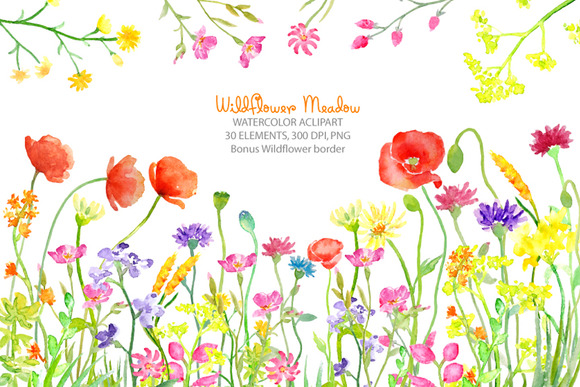 Watercolor Wild flower Meadow ~ Illustrations on Creative Market