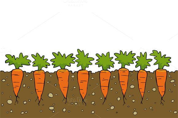 Carrots ~ Illustrations on Creative Market