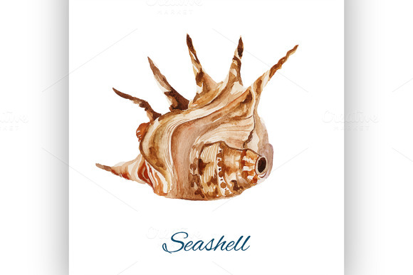 seashell. watercolor painting - Illustrations