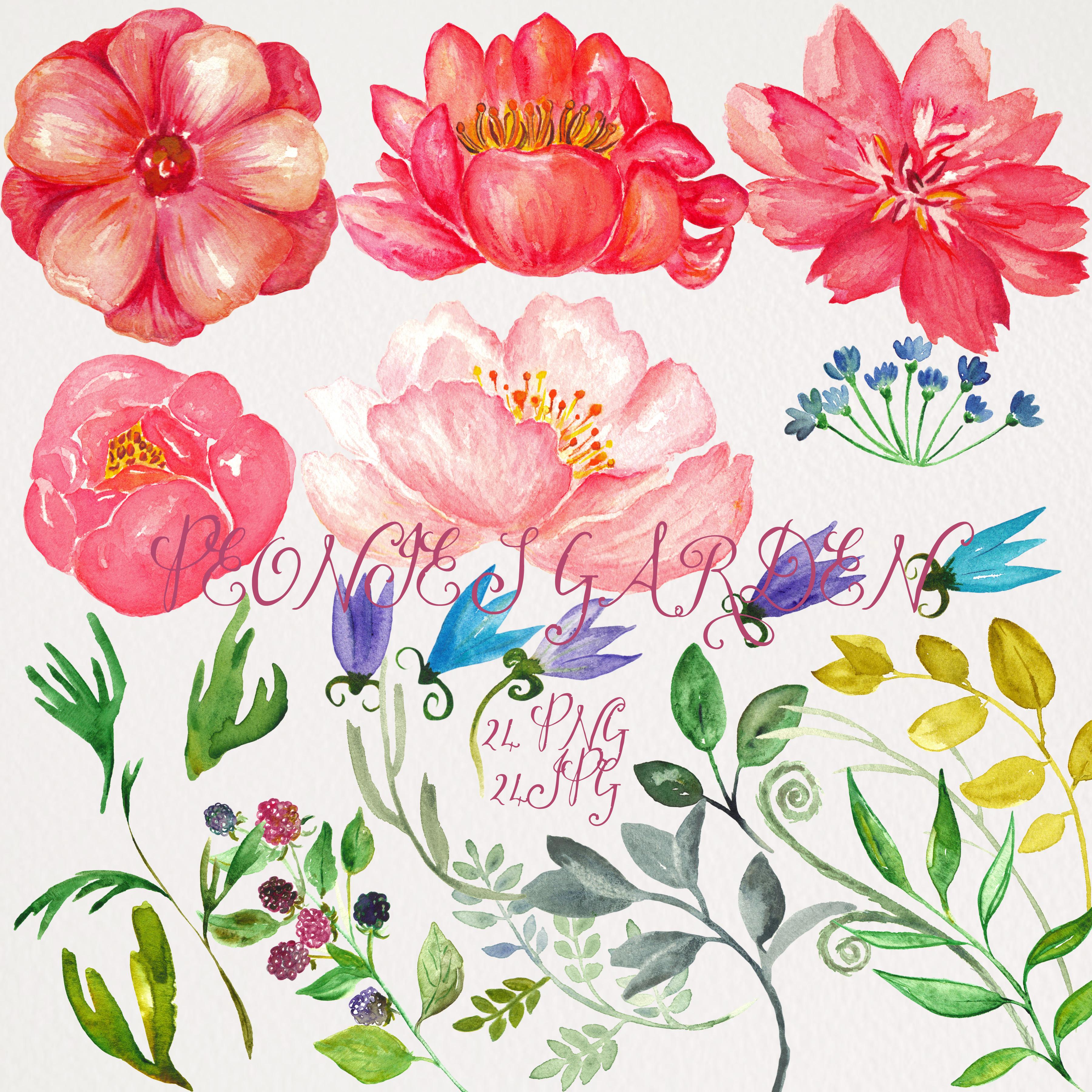peonies garden  watercolor clip art