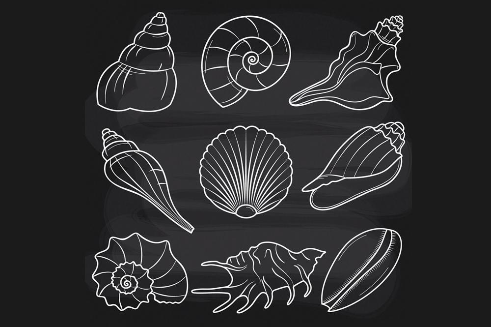 chalkboard seashells