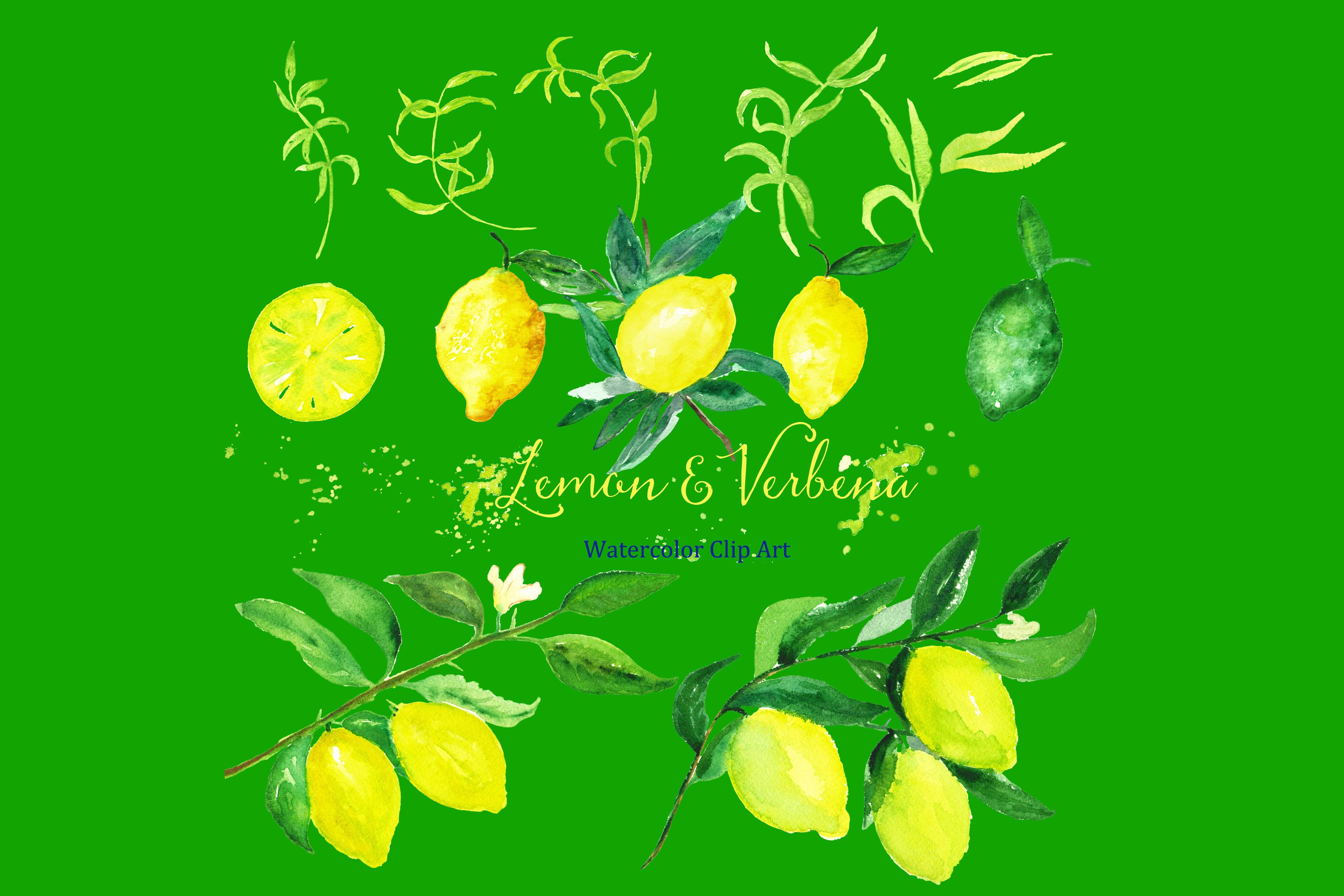 Lemon Amp Verbena Watercolor Clipart Graphics On Creative Market