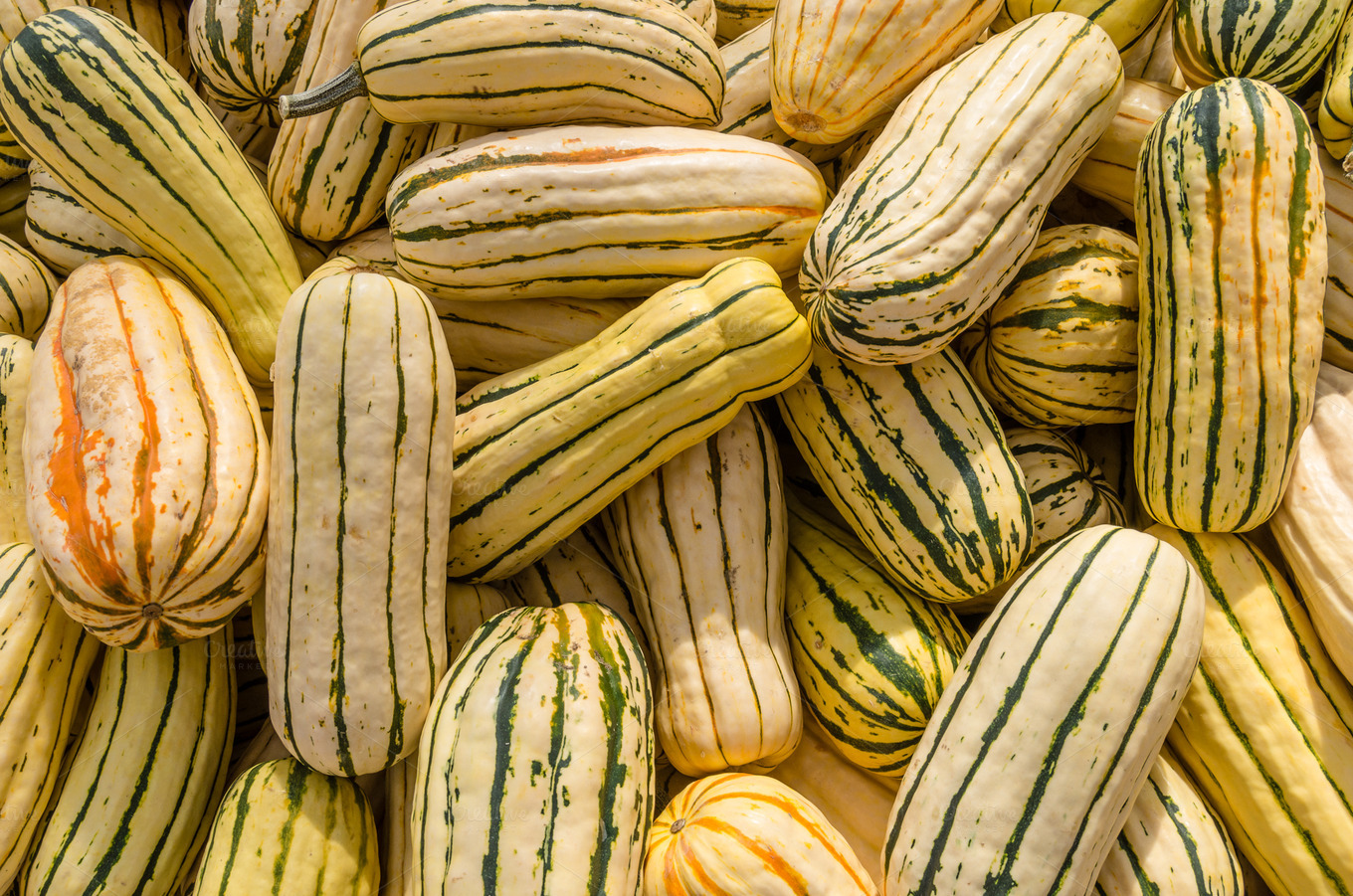 Delicata winter squash ~ Food & Drink Photos on Creative Market