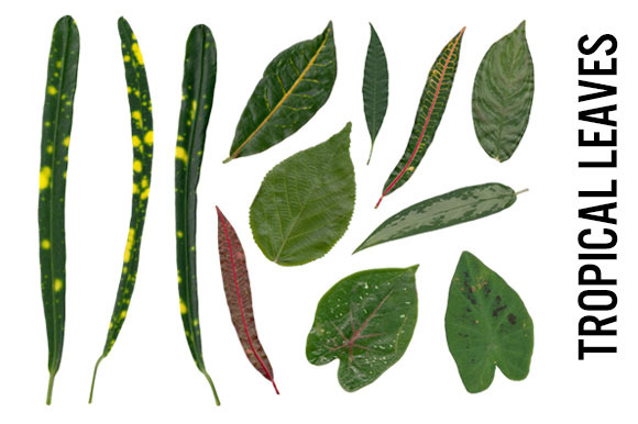 Tropical Leaves Hi Res PNG Trans