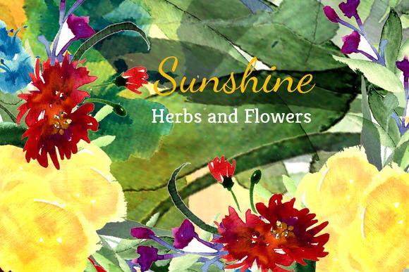 Ўн38 Sunshine Herbs And Flowers