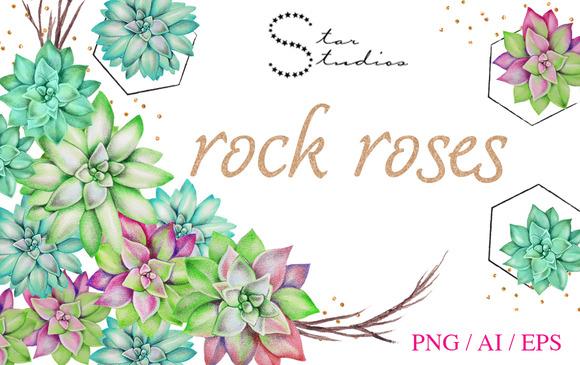 Rock Roses