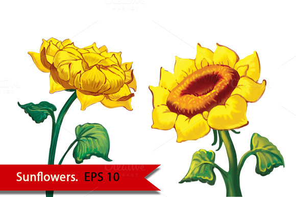 Two Sunflowers. Vector - Objects