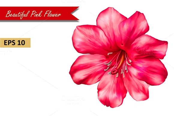Beautiful Pink Flower. Vector - Objects