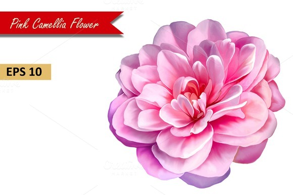 Pink Rose Camellia Flower Vector