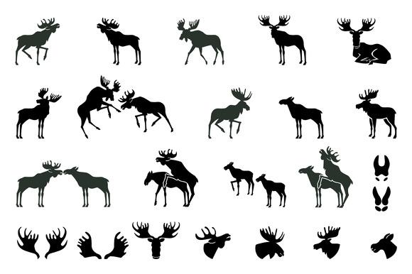 Moose vector